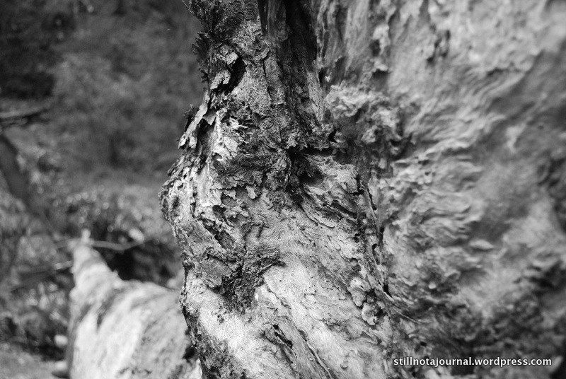 close up black and white fallen tree alice post