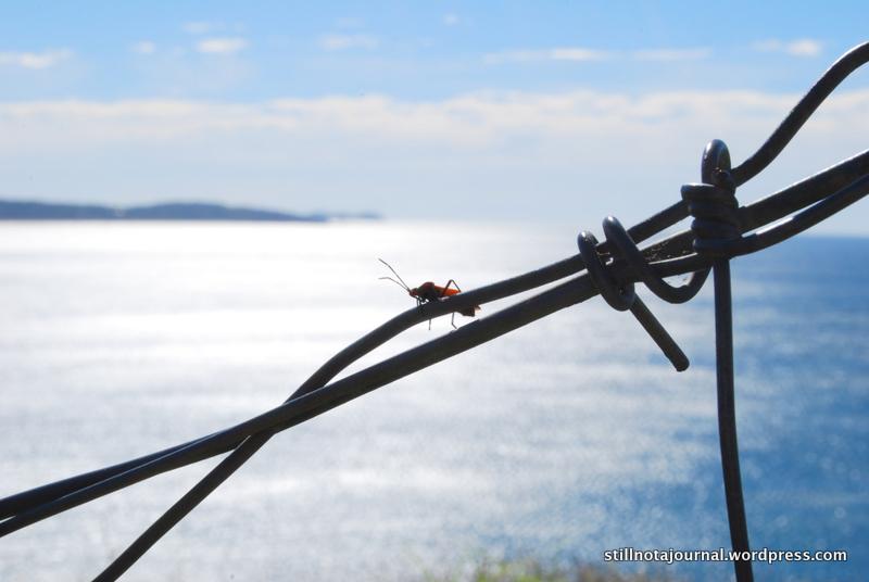 I like... bugs.