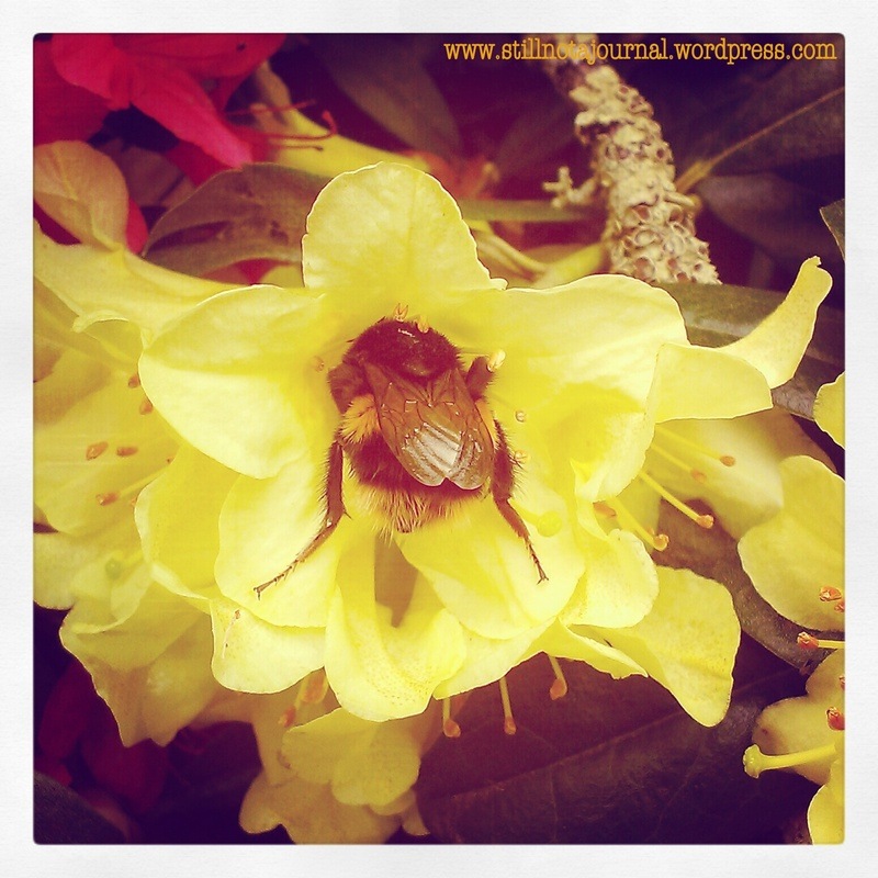 Bumblebee: Look, a flower! OMNOMNOM. It must be spring! ...So why's my arse so bloody cold?