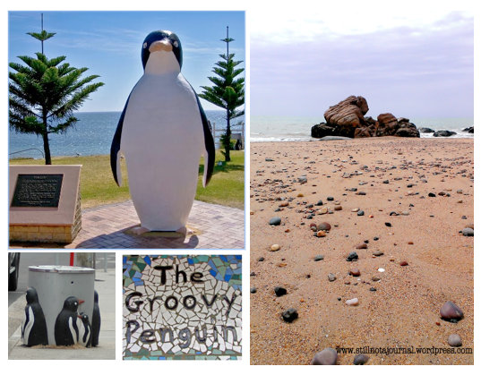 The (daywalker) penguins here like to stare out the tourists and hang around the rubbish bins.