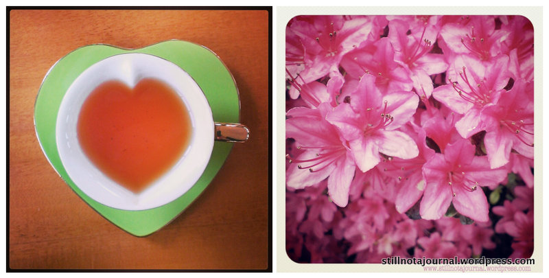 teacup, flowers, Annsleigh Gardens Cafe, Tasmania