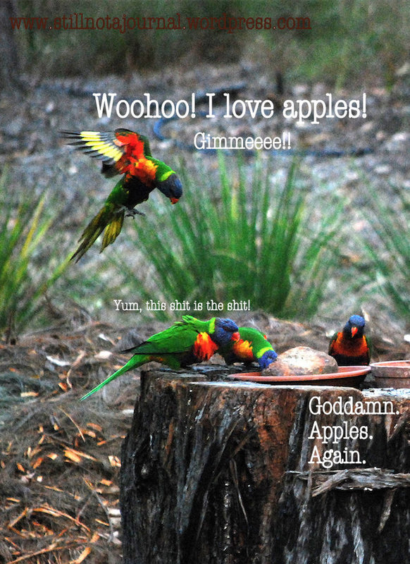 rainbow lorikeets feeding on tree stump
