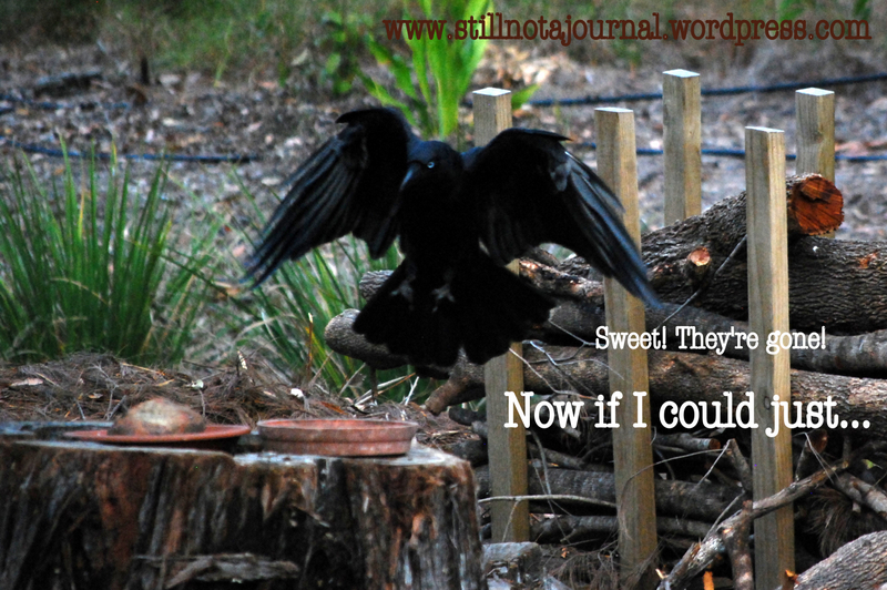 crow feeding on tree stump