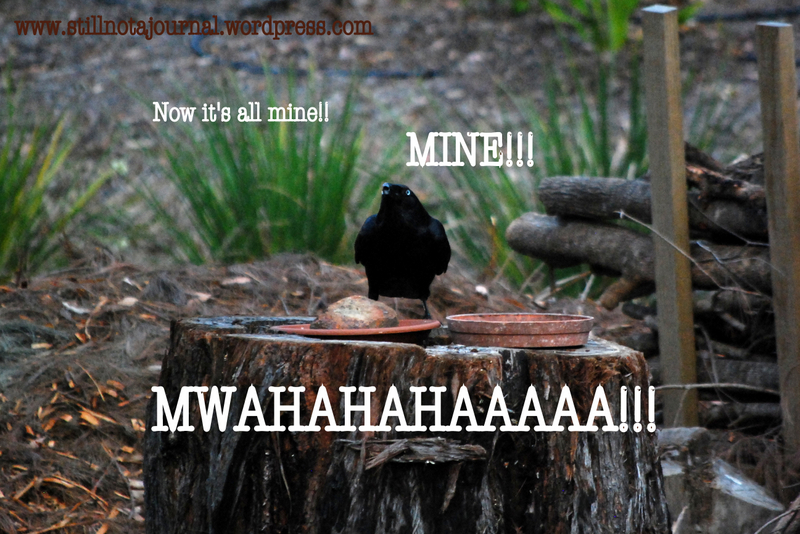 crow feeding on stump