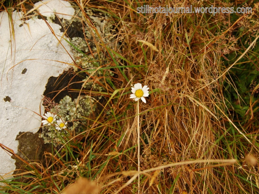 """Daisy thing."" Oh, and a rock. And lichen."