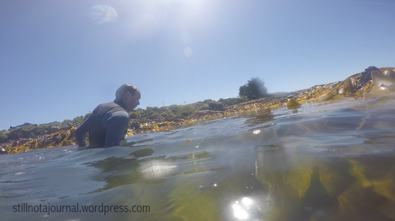 Cruising the kelp beds...