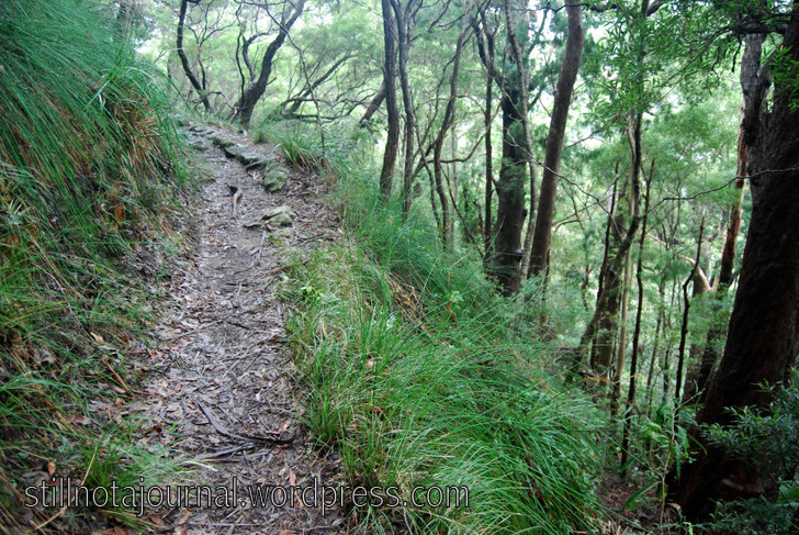 Still quite high up, walking through drier eucalypt forest. Watch where you're going!