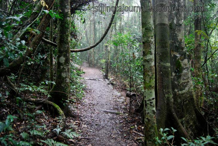 A path through an ancient wilderness...
