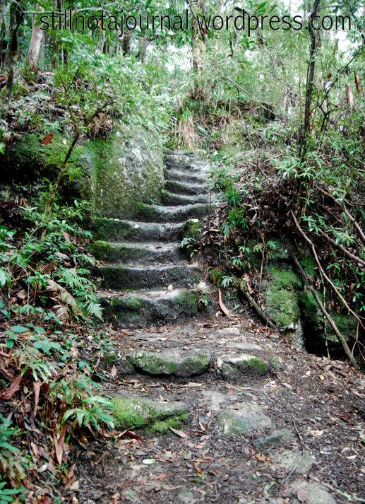 16 hobbit stairs Ballanjui Circuit track, Binna Burra Lamington National Park QLD