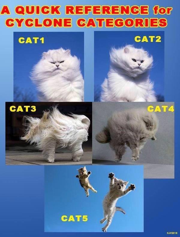 cyclone cats