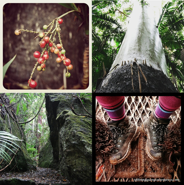 Native fruits, huge Flooded Gum, the (Green) Gate of Mordor, ma boots.