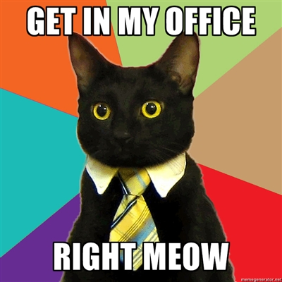 get in my office right meow