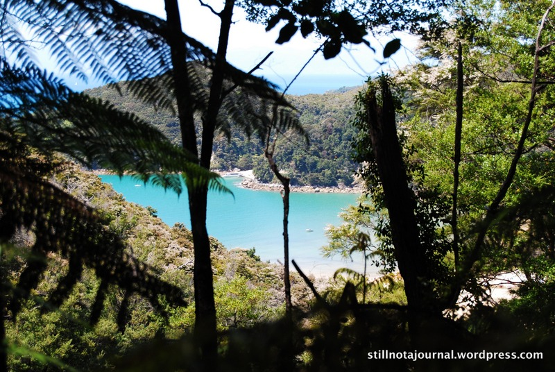 Abel Tasman National Park forest and bay