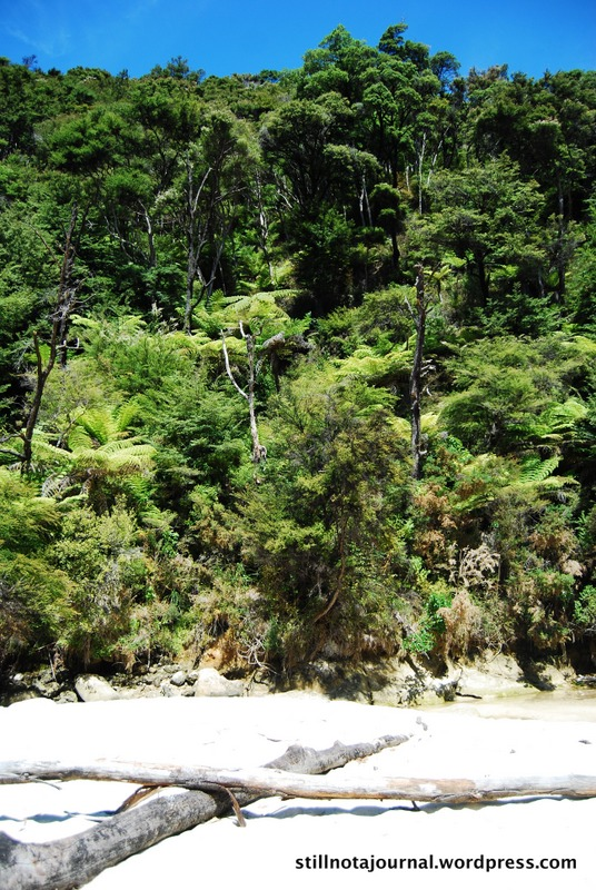 rainforest, Medlands Beach
