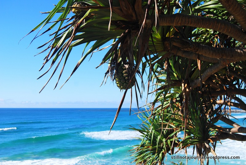 View from Ballina Head. The beautiful blues of the Pacific and the pandanus palm; just like at home!