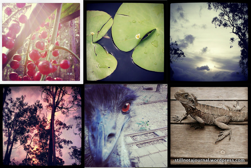 Summer fruits, lilypads, pale sunset, pink sunset, emu, eastern water dragon. Each of these pics is a thousand words I owe you, and once I get around to sharing them they might even be in coherent sentences.