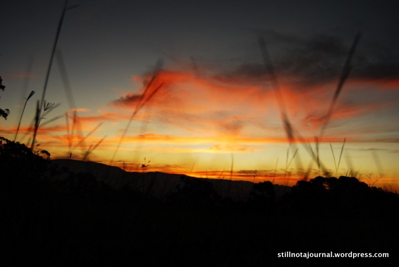 red sunset through grass Gold Coast hinterland