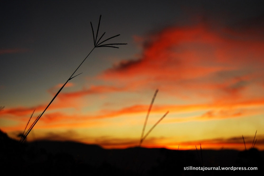 grasses and red sunset Gold Coast hinterland