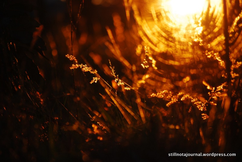 sunlight through grasses