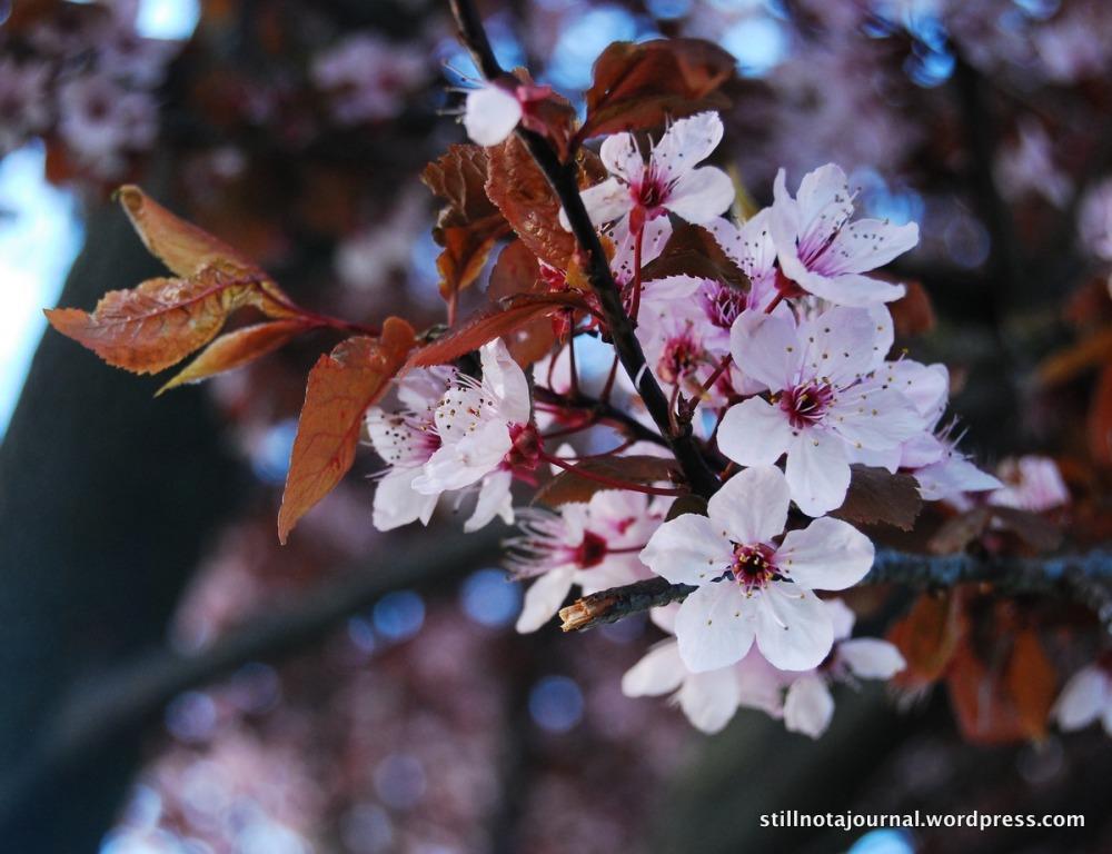Precious petals...