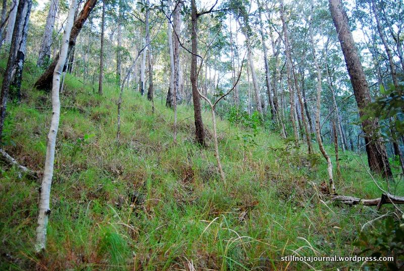 steep hill forest bush