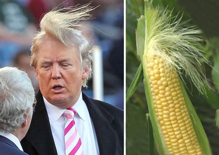 trump-corn-cheeto