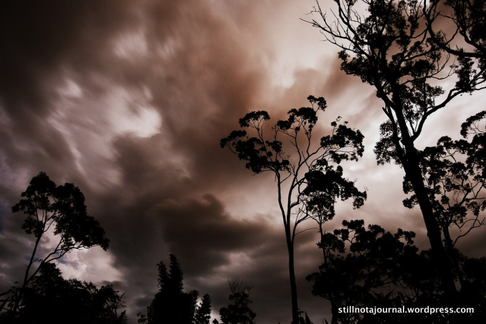 lightning sky tree silhouette clouds gold coast