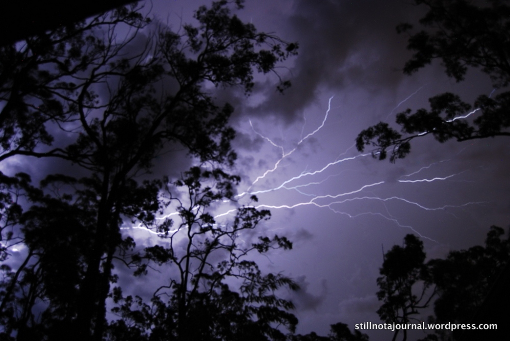 gold coast storm lightning sky clouds tree silhouette